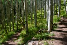 Free Inner Basin Trail Royalty Free Stock Images - 91755019
