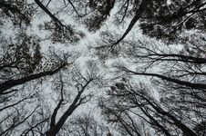 Free Sparse Forest Canopy Stock Photography - 91755252