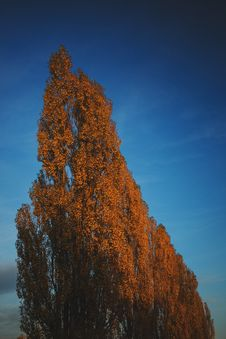 Free Yellow Trees Royalty Free Stock Images - 91755379