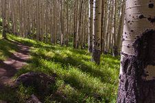 Free Inner Basin Trail No. 29 Stock Photos - 91756073