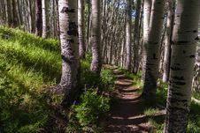 Free Inner Basin Trail No. 29 Stock Image - 91756151