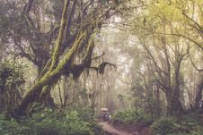 Free Through The Jungle Stock Photography - 91756152