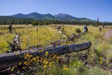 Free Around The Peaks Loop: FR 418 Stock Image - 91756211