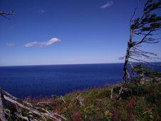 Free 233 - Parc National De L Île-Bonaventure-et-du-Rocher-Percé : Sentier Des Mousses Royalty Free Stock Images - 91756219
