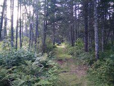 Free 235 - Parc National De L Île-Bonaventure-et-du-Rocher-Percé : Sentier Paget Royalty Free Stock Photo - 91756225