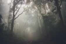 Free Misty Forest Royalty Free Stock Photos - 91756248