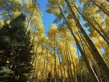 Free Inner Basin Trail Royalty Free Stock Photos - 91756308