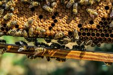 Free Bunch Of Bees On Beehive In Close Up Photography Royalty Free Stock Photography - 91756887