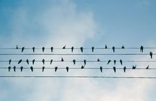 Free Birds On Power Lines Royalty Free Stock Image - 91758266