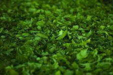 Free Green Herbs Royalty Free Stock Photos - 91758728