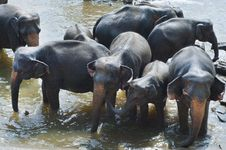 Free Elephants In River Stock Photo - 91758750