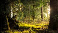 Free Mossy Field In Forest Royalty Free Stock Photo - 91759375