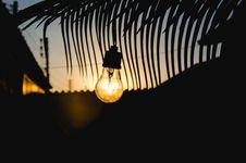 Free Light Bulb And Palm Tree Stock Image - 91759591