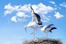 Free Two Storks In A Nest Stock Image - 91759861