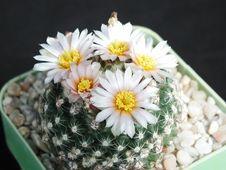 Free Cactus 123 Royalty Free Stock Photos - 91772478