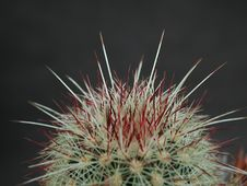 Free Cactus 200 Royalty Free Stock Photos - 91772848