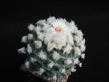 Free Cactus 210 Stock Images - 91772954