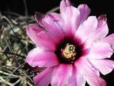 Free Cactus 40 Stock Photos - 91773103