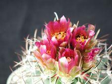 Free Cactus 90 Stock Image - 91773421