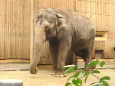 Free Elefant Stock Image - 91776251