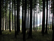Free Forest 19 Stock Photography - 91777622