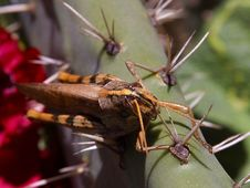 Free Grasshoppers Stock Images - 91779164