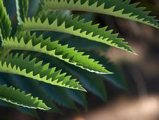 Free Jagged Leaves Royalty Free Stock Photos - 91780268