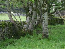 Free Plant, Natural Landscape, Tree, Land Lot Royalty Free Stock Image - 91780666