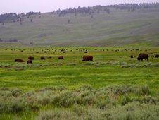 Free Lamar Valley Royalty Free Stock Images - 91780899