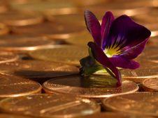 Free Penny 2 Stock Photo - 91784400