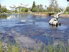 Free Pond Elefant Stock Image - 91784951