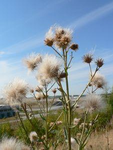 Free Seeding Flower Stock Photo - 91787080