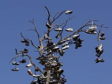 Free Shoe Tree Royalty Free Stock Images - 91787259