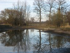 Free Trees Mirroring In Pond Stock Image - 91790741