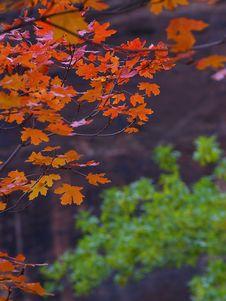 Free Zion Autumn Royalty Free Stock Photo - 91792475
