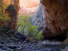 Free Zion Narrows 13 Royalty Free Stock Images - 91792509