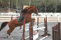 Free Blond Woman Jumping Horse Over Gate Royalty Free Stock Images - 9187769