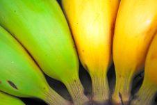 Free Close Up Shot Of Green And Yellow Bananas Stock Photography - 9185992