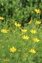 Free Flowers Stock Photo - 927000