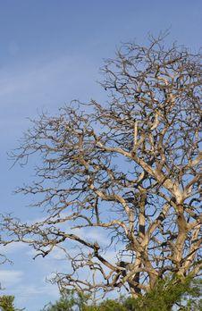 Free Tree Branch Royalty Free Stock Image - 920036