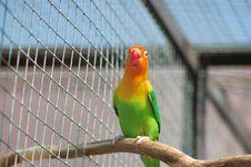 Free Parrot Royalty Free Stock Photos - 920388