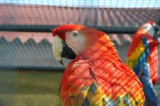 Free Macaw Royalty Free Stock Image - 920396