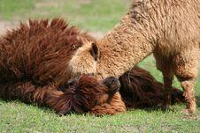 Free Como Te Llamas Royalty Free Stock Photos - 920738