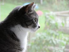 Free Cat Watching Outside Activity Royalty Free Stock Photography - 921417