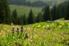 Free Delicate Violet Landscape Royalty Free Stock Photography - 921587