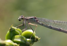 Free Brown Dragon Fly Stock Photos - 921603