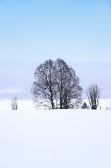 Free Lonely Tree Stock Images - 921614
