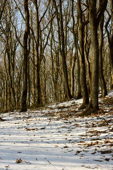 Free Winter Royalty Free Stock Image - 921766