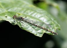 Free Dragon Fly On Leaf Edge Stock Photo - 921970