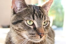 Free Cat Macro Royalty Free Stock Photography - 923597